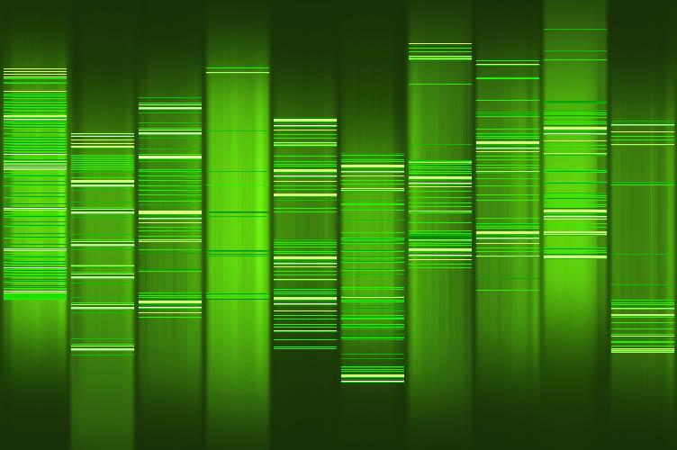 Volkersfreunde.de DNA